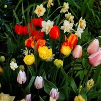 Kwiaty Wiosenne.