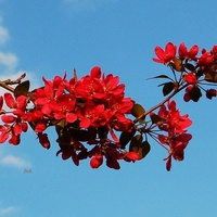 Kwitnąca gałązka wiosenna