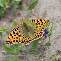 Polowanie na motylki...