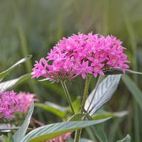Przydrożne kwiatki