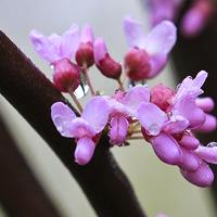 Smaczne jadalne kwiatki