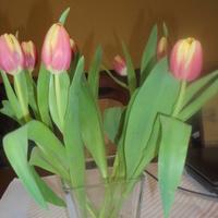 Tulipany-oczywiscie z B...........