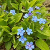 Wiosenne niebieskości :)