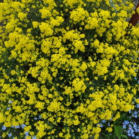 Zanim zakwitną w ogrodach