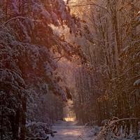 Zapraszam na zimowy spacer