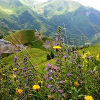 Zielnik w Alpach