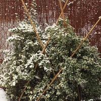 Zimowe działkowe pozdrowienia