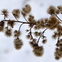 Zimowy chwast w lesie