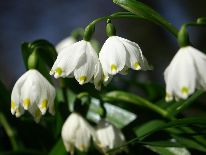Biało acz wiosennie...