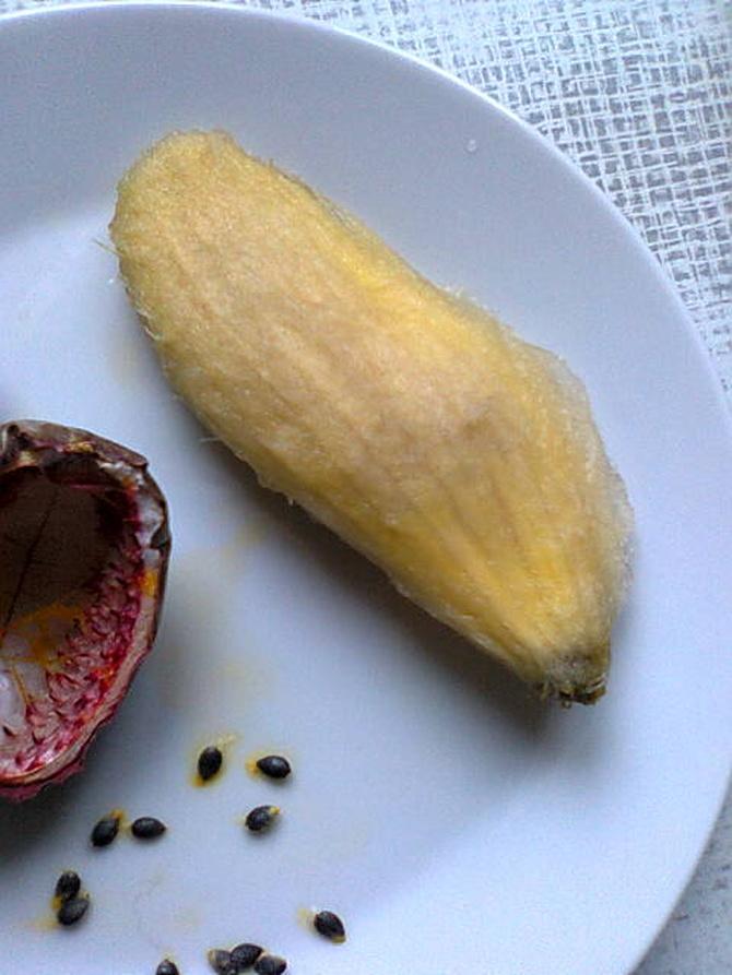 Pestka z mango