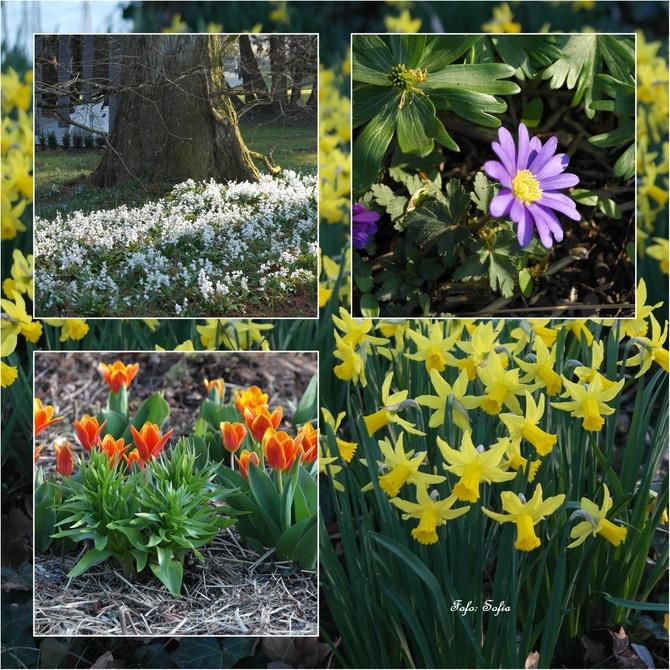 wiosny ze słońcem na dobry poczatek tygodnia...
