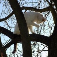 A na drzewach kwitnące kotki:)