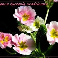 Anitko - Andromedea