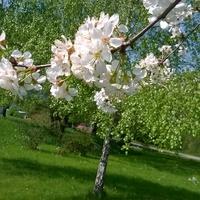 Dla solenizantek życzę wiosny od już !