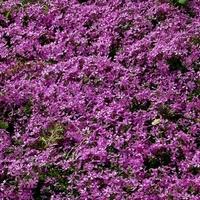 Dywanik kwiatowy jednokolorowy