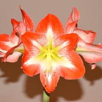 kwiat z bliska.