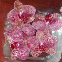 Kwiatki storczyka-podczas...