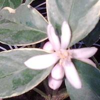 Kwitnie i pachnie