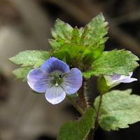 miniaturowe kwitnienie