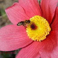 Obudziły się pszczółki
