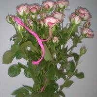 Róże dla mojego kochanego taty