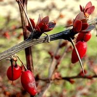 Spotkanie wiosny z jesienią