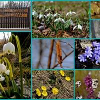 To moja dzisiejsza wiosna ☀