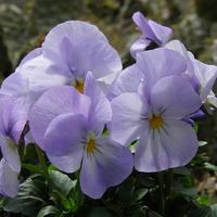 w odcieniu fioletu