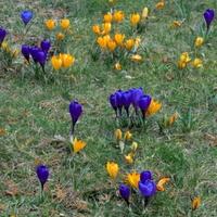 Wiosna na moim osiedlu.