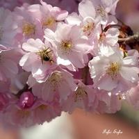 wiosna... panie sierżancie:-)