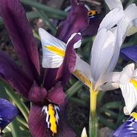 Wiosna w wielu kolorach;-)