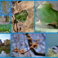 z każdym dniem więcej wiosny ☺