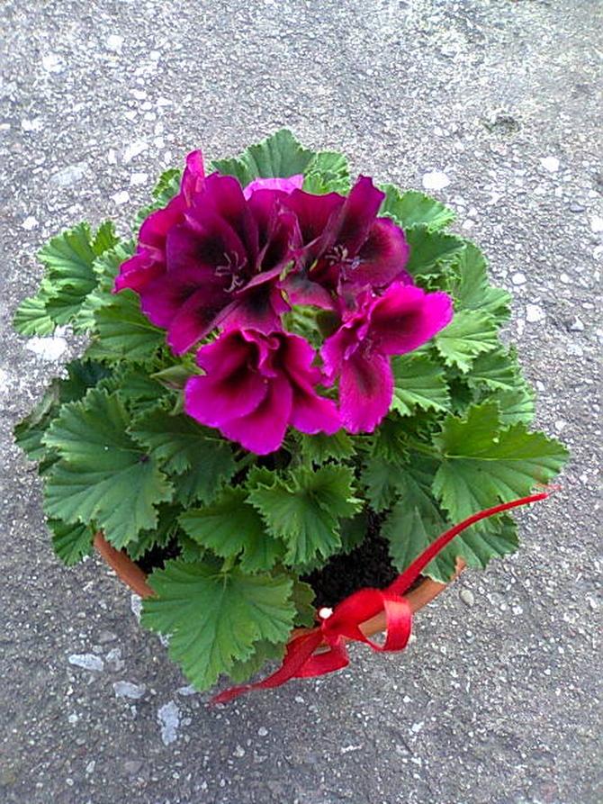 Anginka zachwyca kwiatami