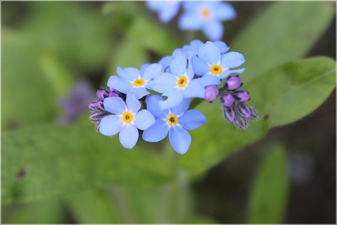 Kwiatki z bajki...