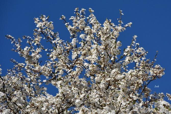 mamy prawdziwą wiosnę