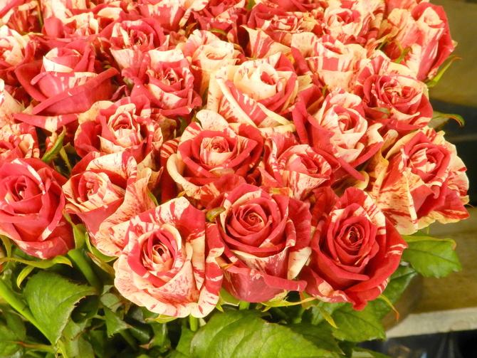Róże......