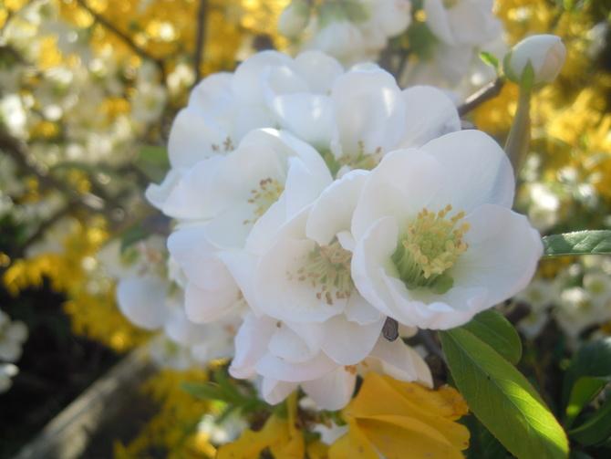 wiosna.......