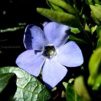 Delikatny błękit wiosny:)