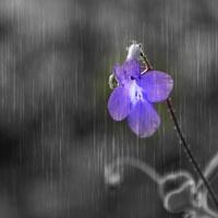 deszczowa wariacja ☺