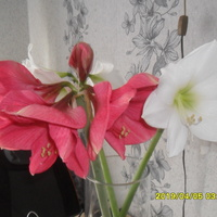 Jeszcze kwitna
