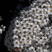 Kwiatek na kwiatku;-)