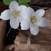 Kwiatek z lasu