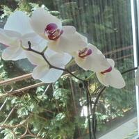 Następny biały kwitnie...