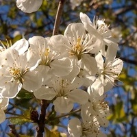 Wiosenne kwiaty i życzenia