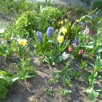 Wiosenny Ogródek
