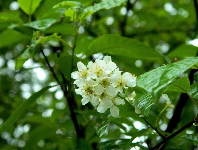 Deszczowe kwiatki:)
