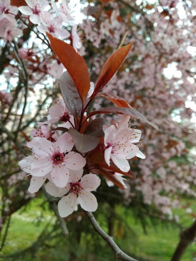 Wiosenne kwiaty dla Solenizantki