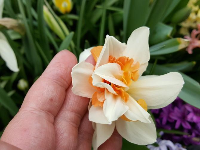 wiosna w pełni rozkwitu