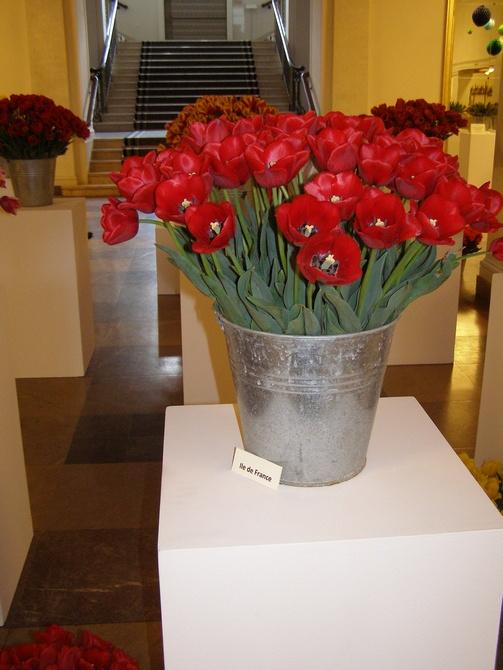 Wystawa tulipanów w Auli UAM