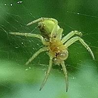 Ja chcę motylki, a nie pająki :))